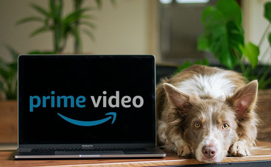 PrimeVideo and Dog