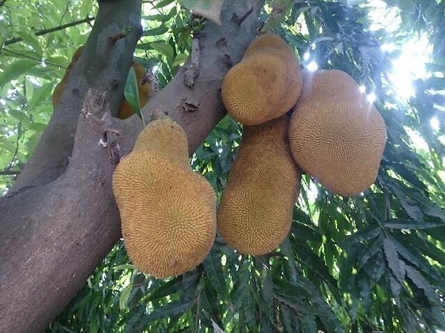 ガーナはフルーツがいっぱい