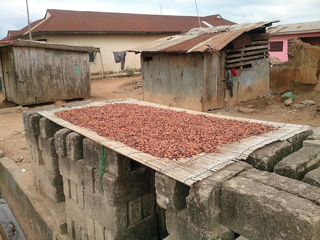 カカオ豆はカカオのみの中の種の部分を乾燥させたもの。